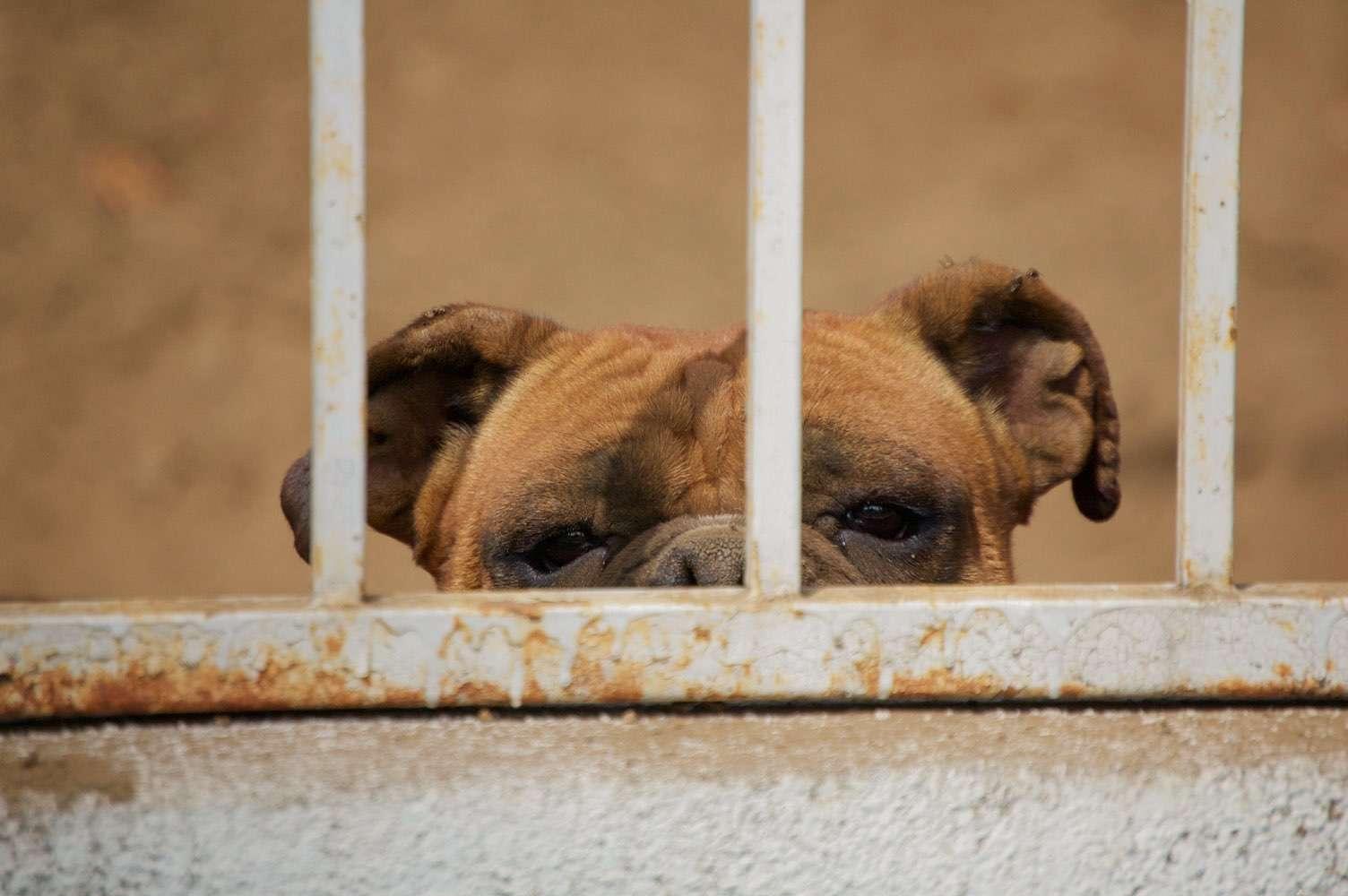 Hund in Freiheitsstrafe? Hund hinter Gittern.